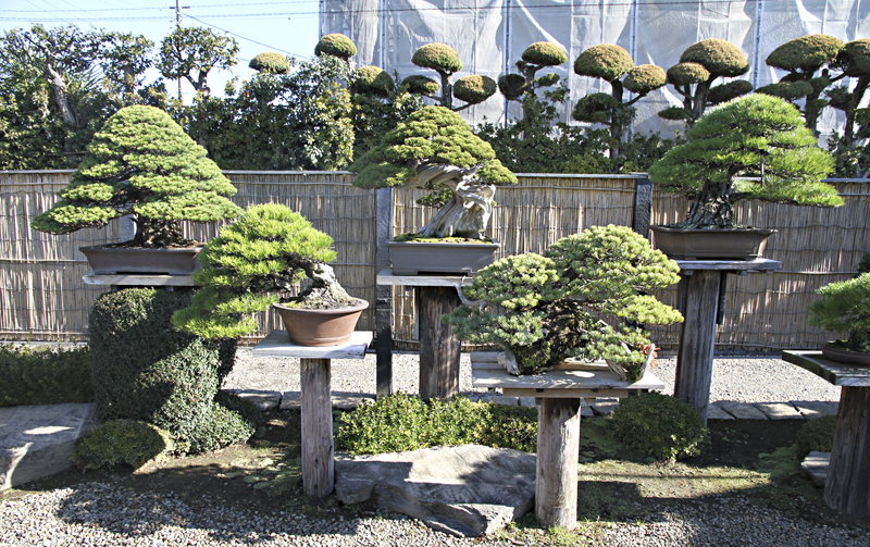 Autumn 2013 Japan Bonsai Exploration Tour Valavanis Bonsai Blog