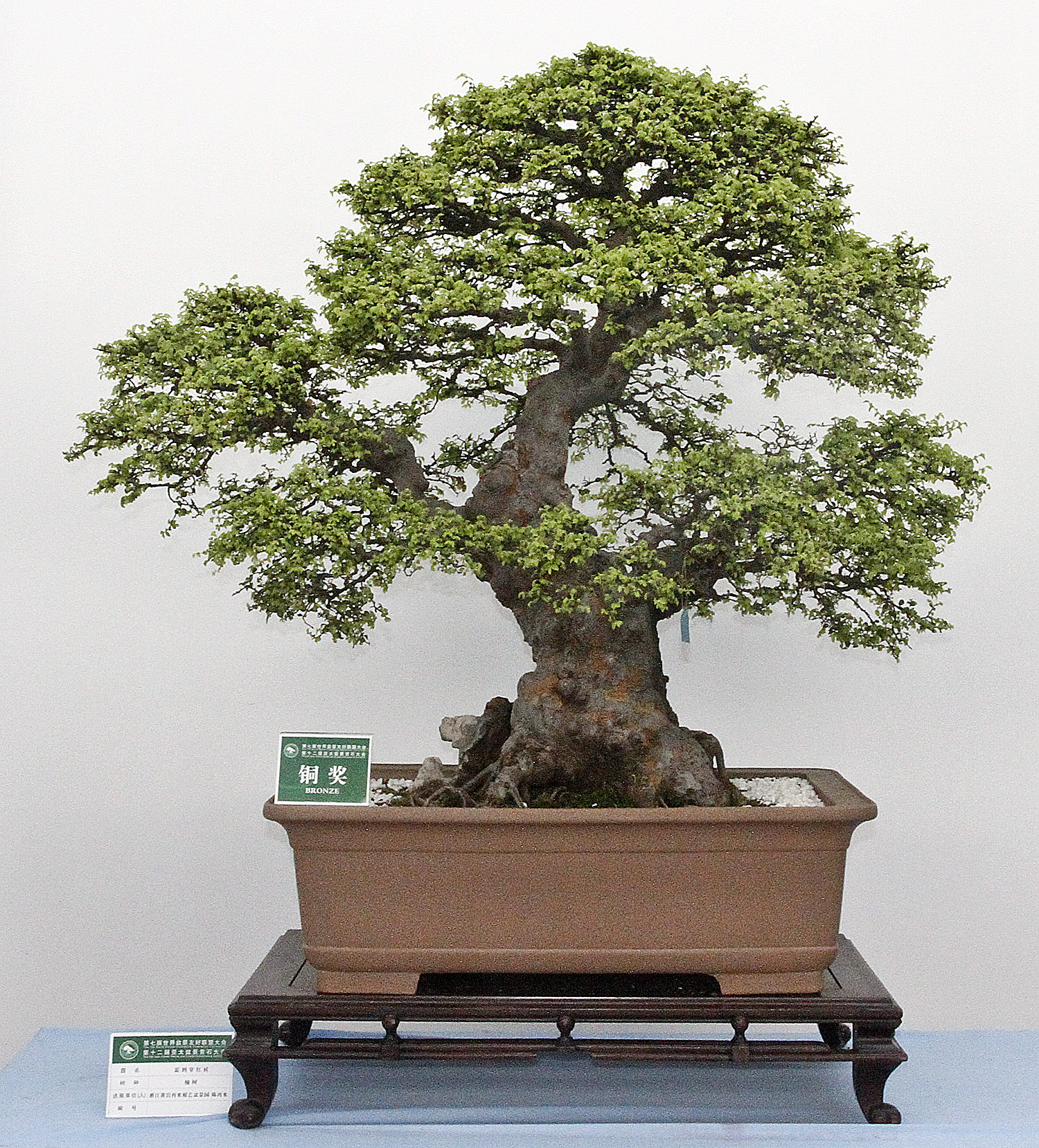 WORLD BONSAI FRIENDSHIP FEDERATION CONVENTION Part 2 Valavanis