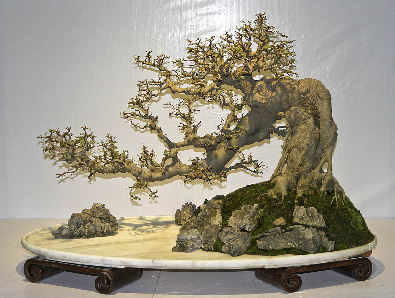china guzhen national penjing exhibition  valavanis bonsai, Beautiful flower