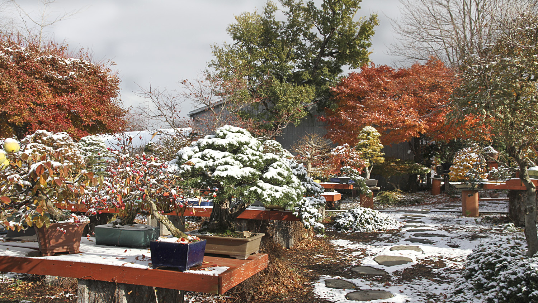 winter arrives in upstate new york u2013 valavanis bonsai blog