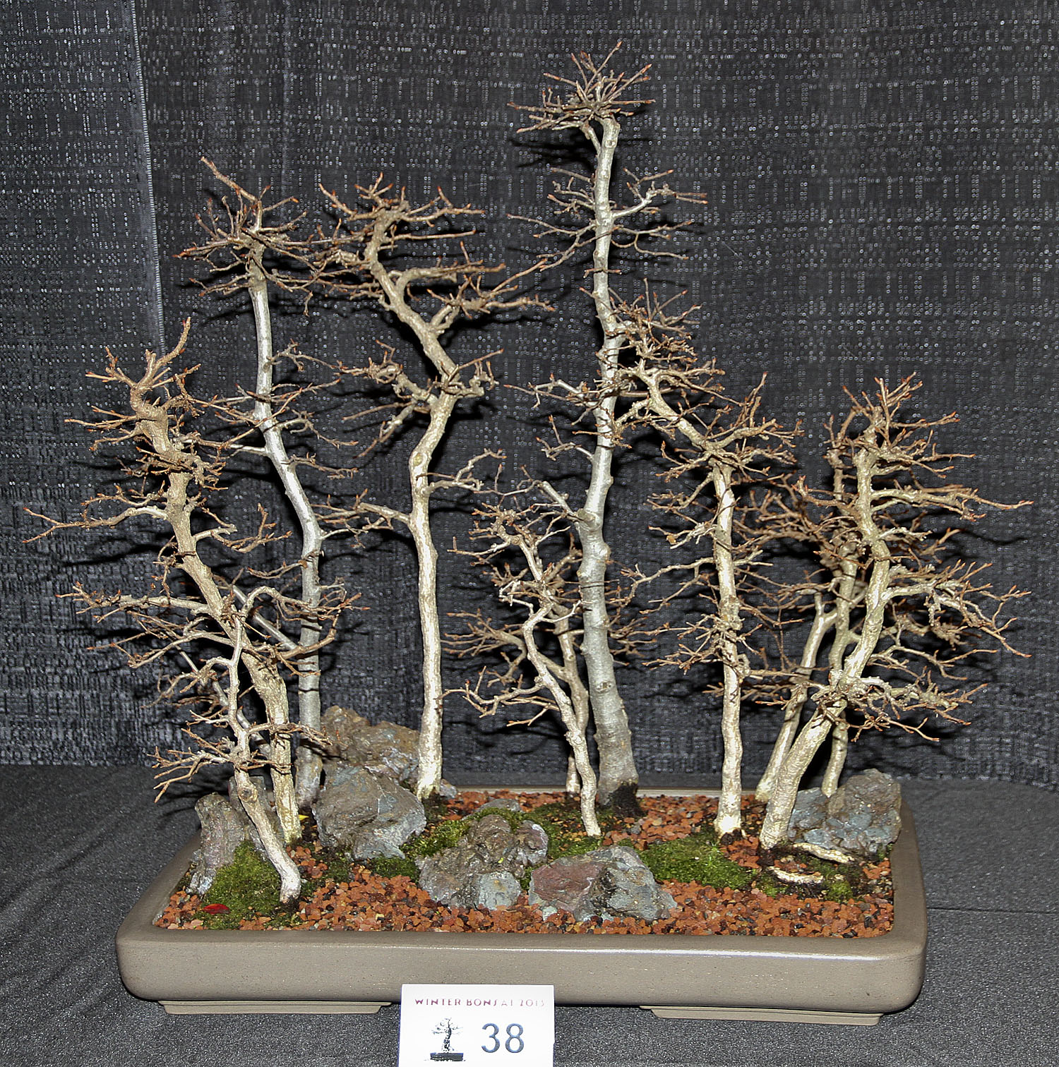 Bonsai In The World May 2013