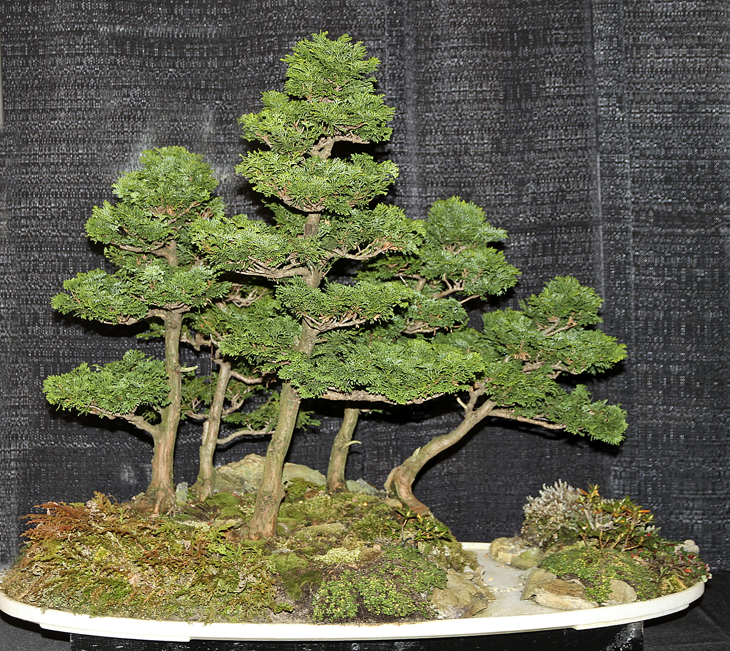 Bonsai In The World