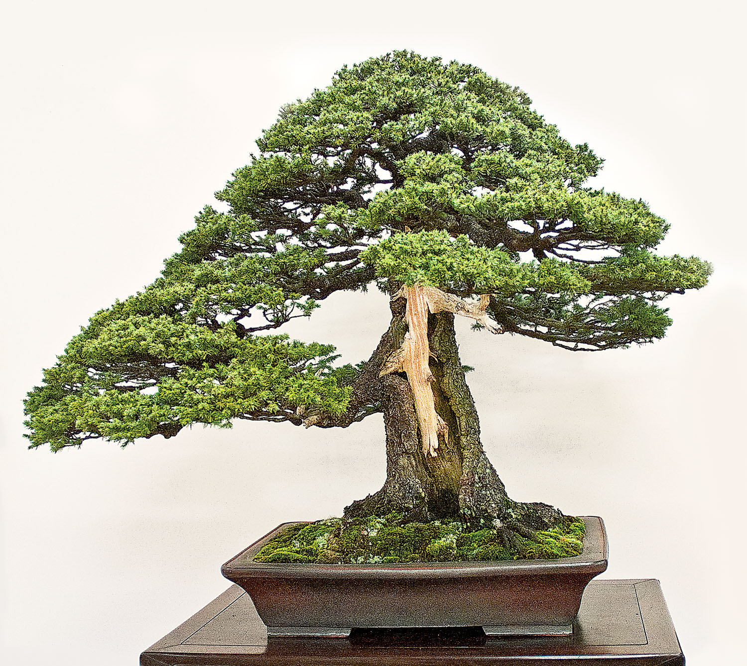 there u2019s more to bonsai that meets the eye valavanis bonsai wiring 101 bonsai wire how to