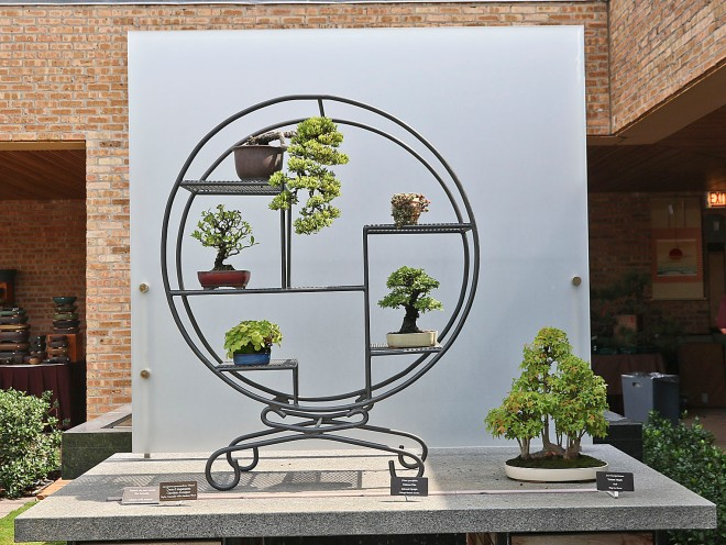 5 OUTDOOR SHOHIN BONSAI