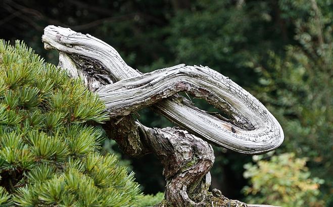 2015 autumn japan bonsai exploration part 6 valavanis for Unusual bonsai creations