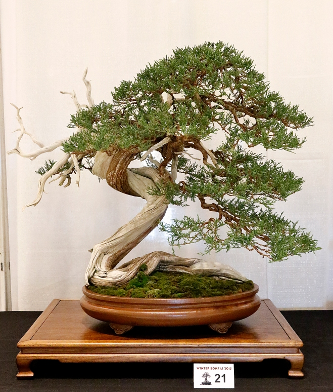 2015 Winter Silhouette Bonsai Expo Valavanis Bonsai Blog