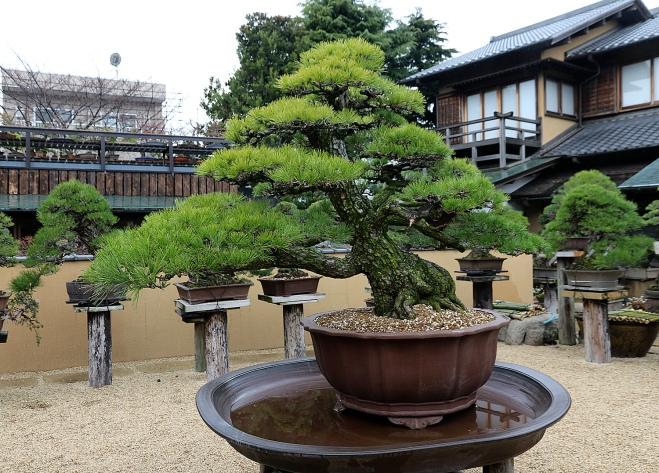 Image result for Shunkaen Bonsai Museum  Design Möbel Einzigartige Design Möbel an die beste Reiseziele inspiriert 124