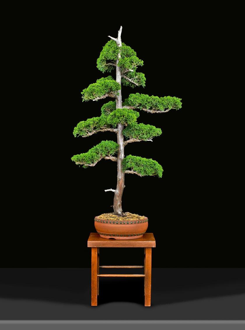 TREE 2340142