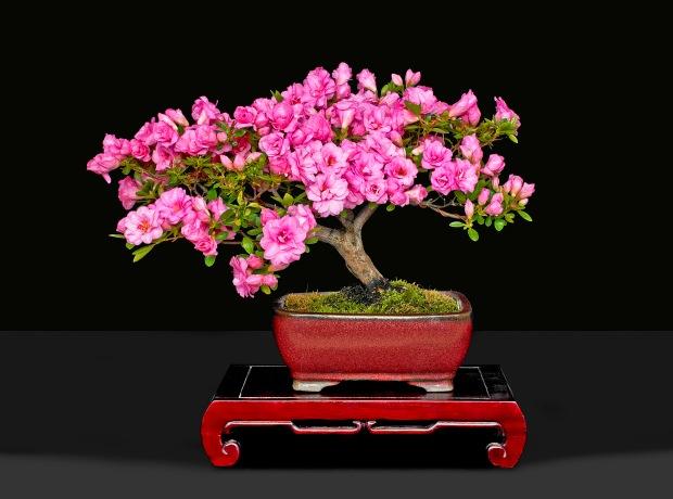 TREE 4640239