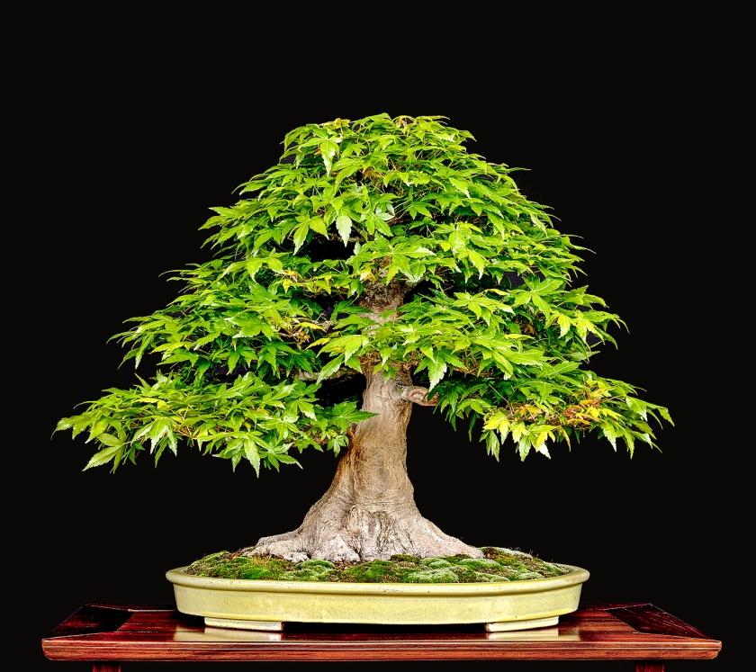 TREE NO. 10 2