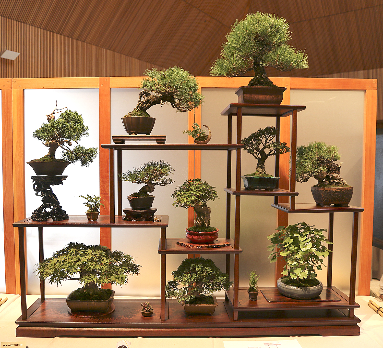 As Usual The Chicago Botanic Displayed Several Of Their Bonsai In Two  Courtyards On Unusual Display Tables With Backgrounds And Lighting.