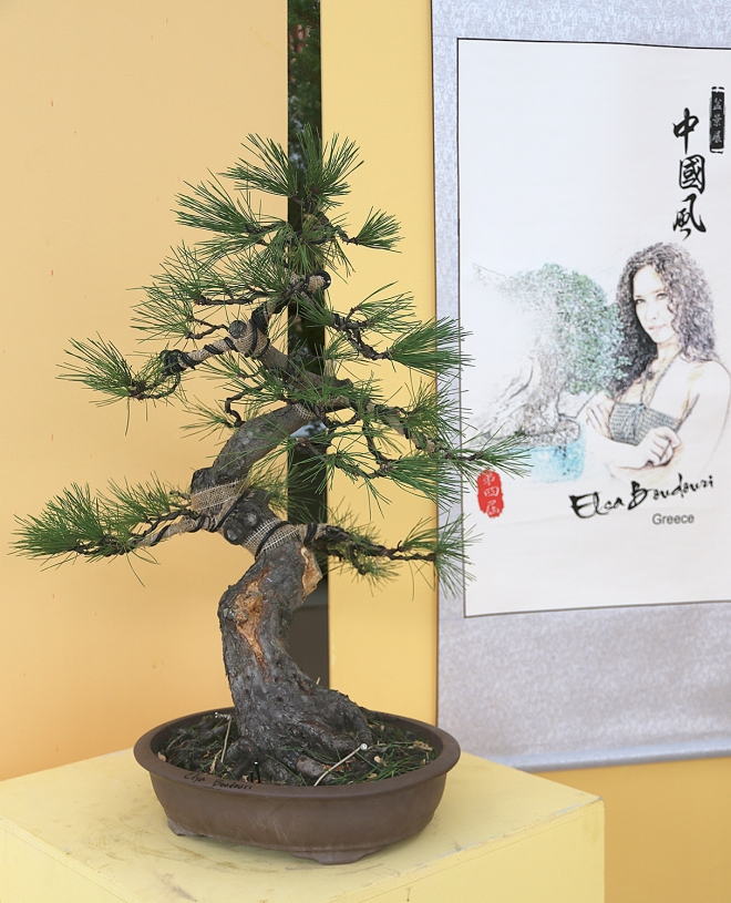 Strange 2017 4Th Zhongguo Feng Penjing Exhibition Part 2 Demonstrations Wiring Cloud Oideiuggs Outletorg