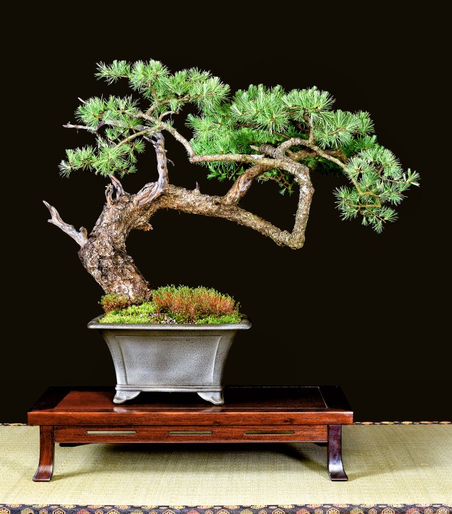 TREE 1-24574