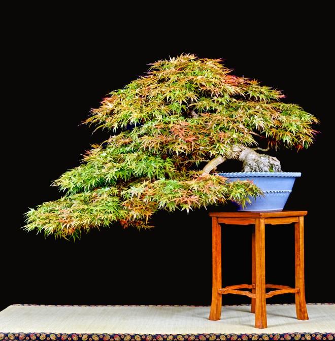 TREE 10-4742 2