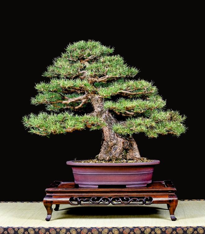 TREE 14-4771