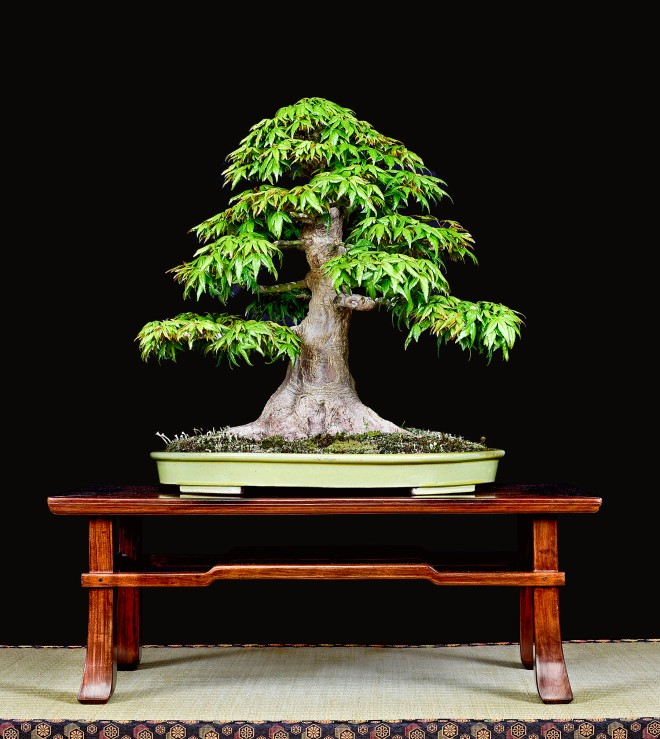 TREE 18-4788