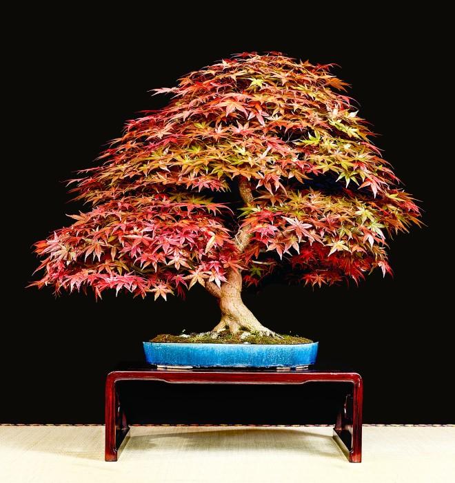 TREE 2-4628C