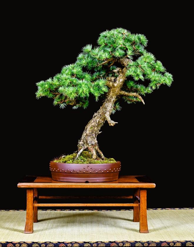 TREE 25-4813