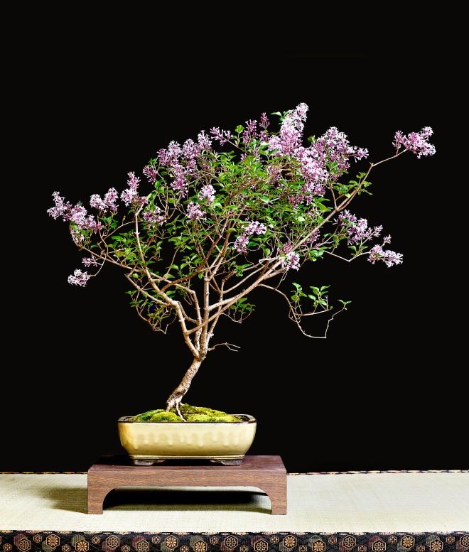 TREE 29-4827