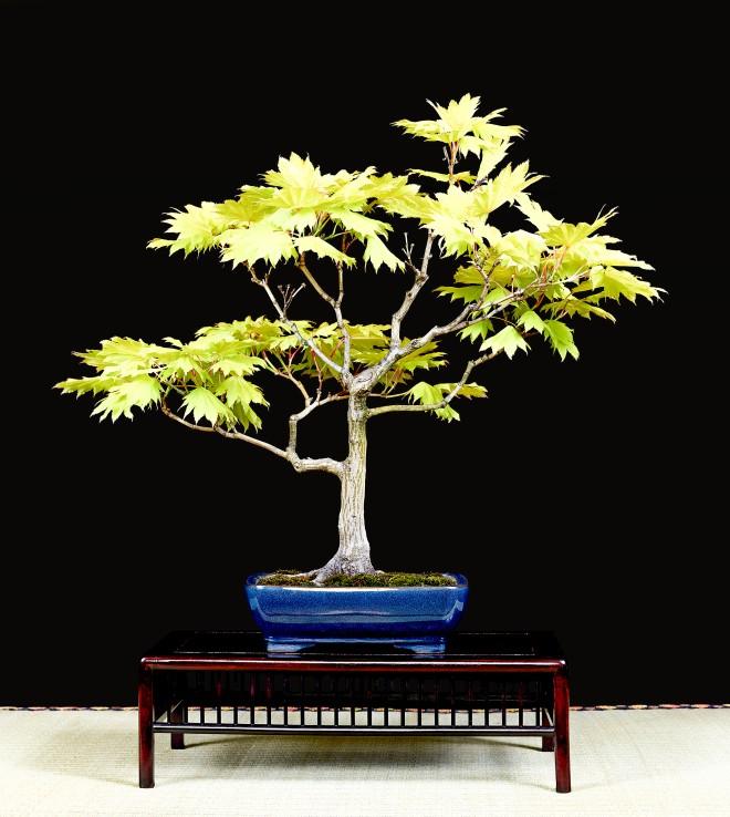 TREE 30-4830