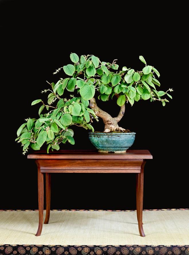 TREE 36-4853