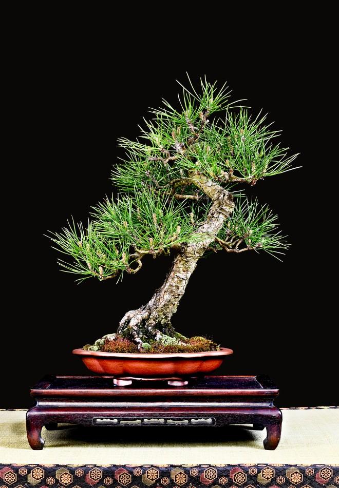 TREE 39-4861