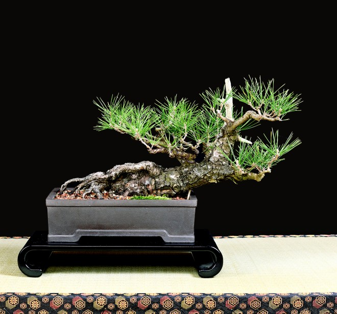 TREE 44-4887