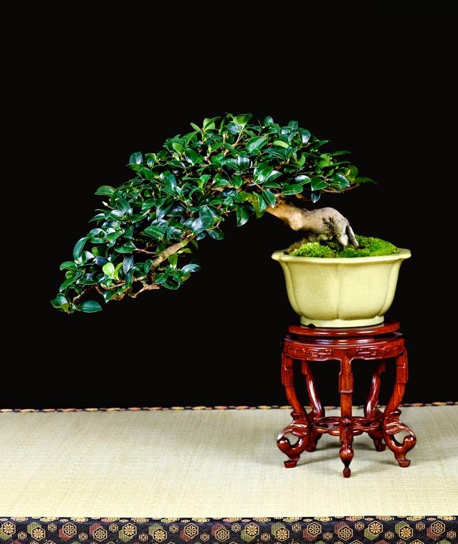 TREE 45-4891