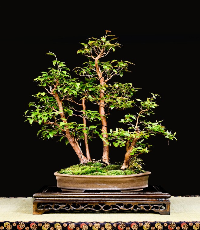 TREE 46-4900