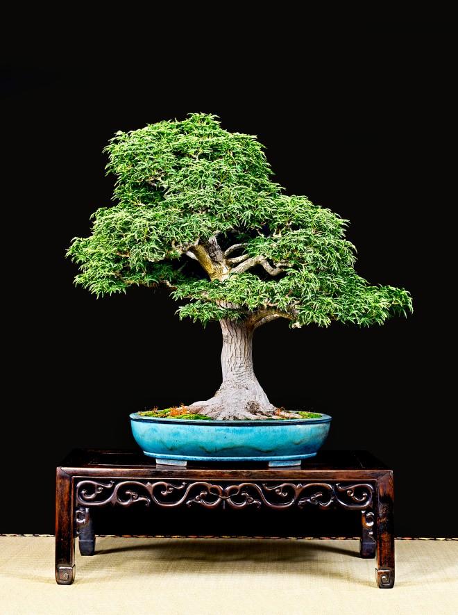 TREE 5-4680