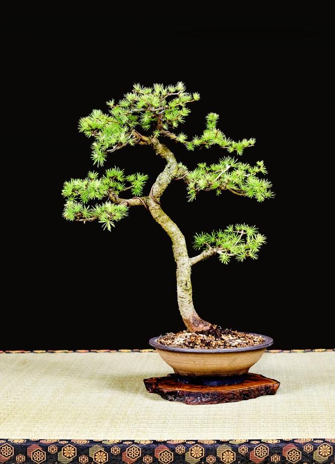 TREE 55-4916