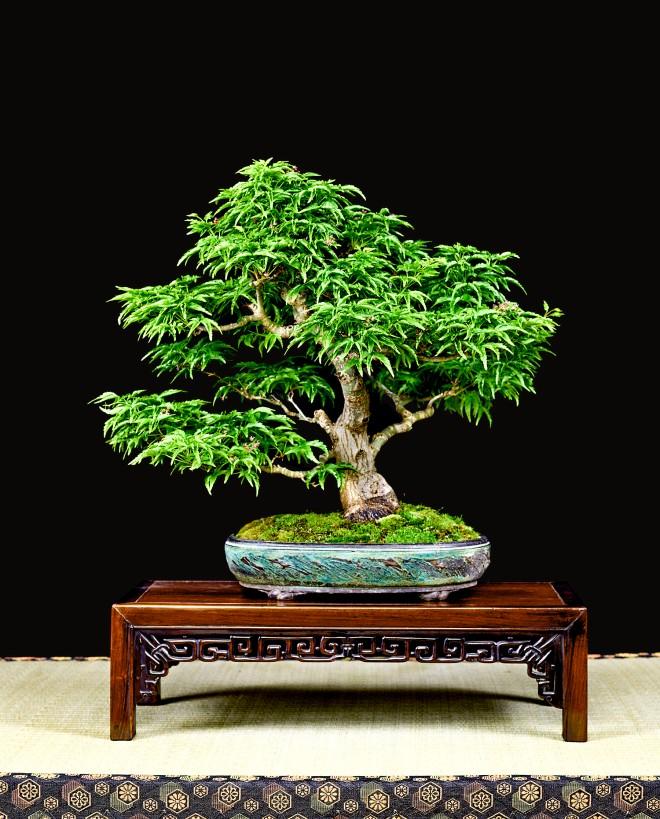 TREE 56-4895