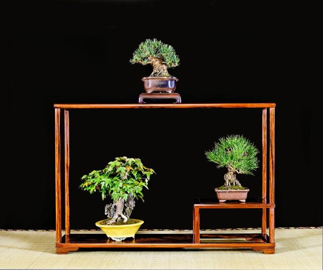 TREE 59-4927