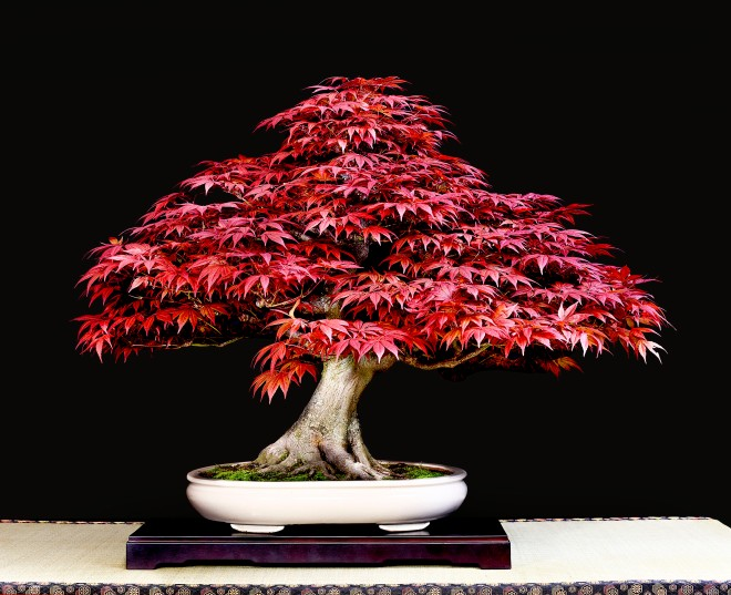 TREE 8-4717