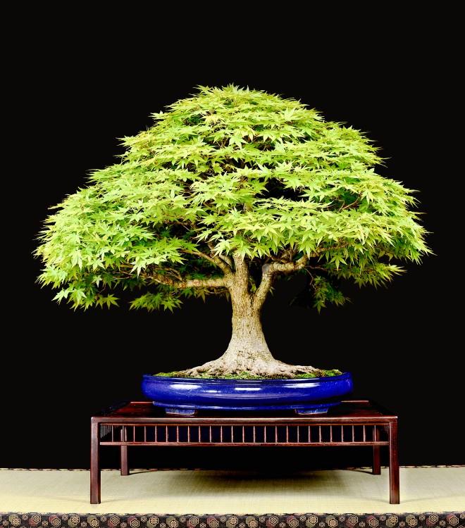 TREE 9-4731