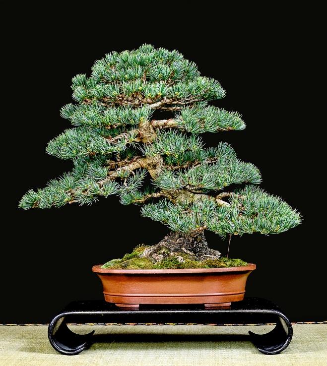 TREE 47-4901