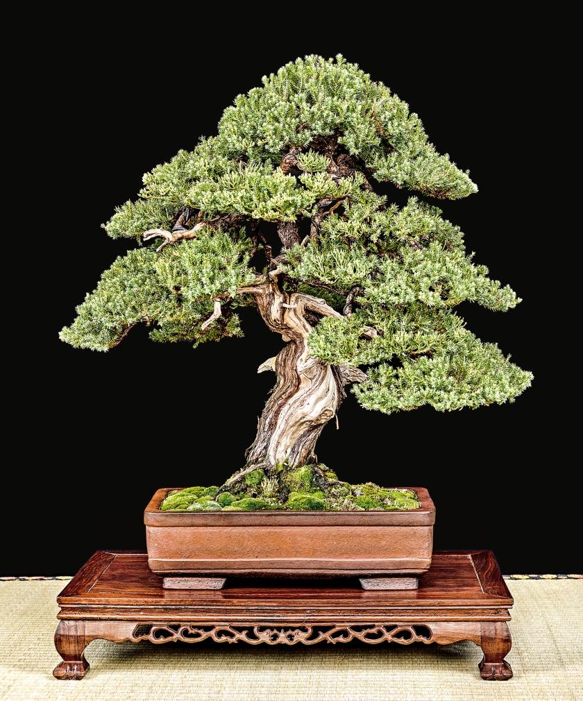 TREE 129 3