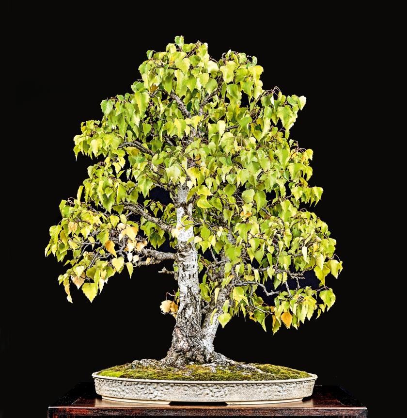 TREE 178 4