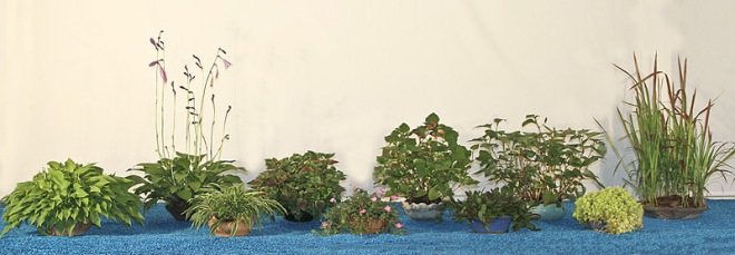 8B ACCESSORY-PLANTS-WEB